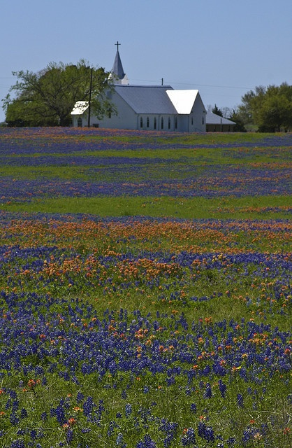 Texas Country Church with Wildflowers