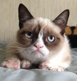 grumpy kitty.