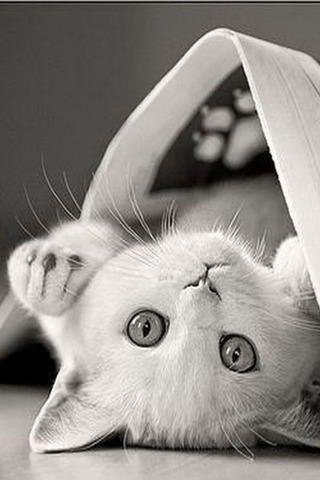yet another kitten