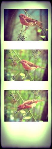bird bird bird.