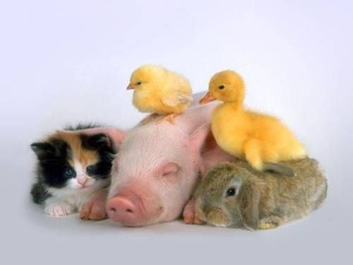how many baby animals can you get in one picture?