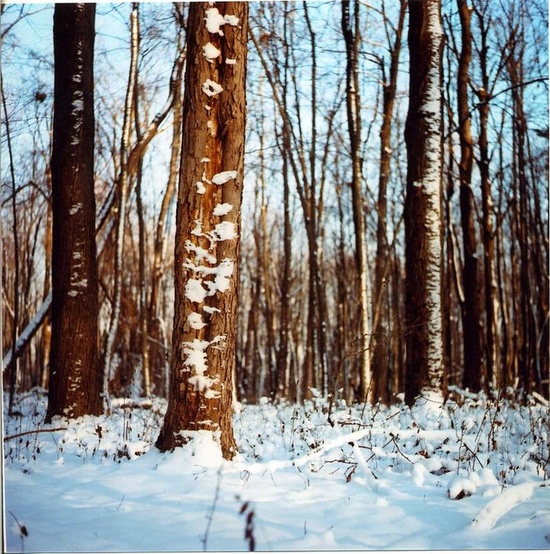 Sometimes I need a reminder that winter can be beautiful, too. Photo by Claire Helene. #snow #trees