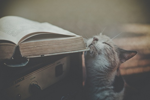 book and a cat-- what else do I need?
