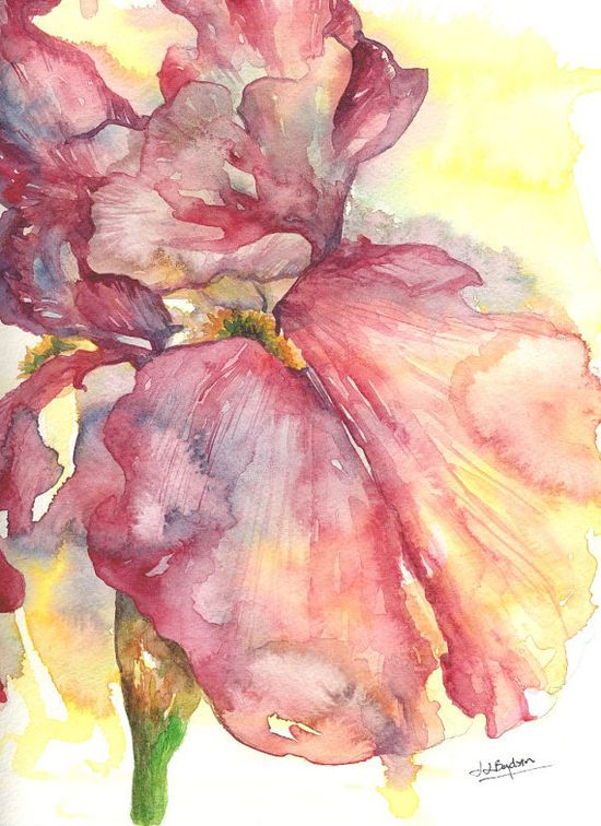 Watercolor Red Iris -Etsy.
