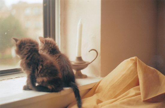 Baby kitties!