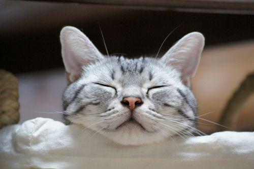 #cute #cats #pets