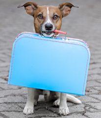 Dog Emergency Preparedness