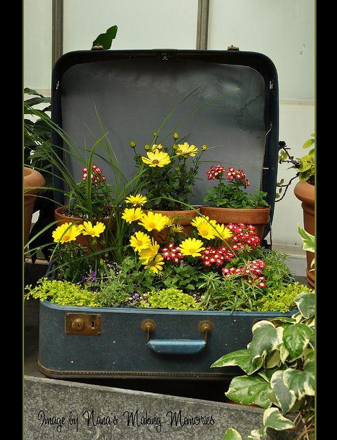 Suitcase as container garden.