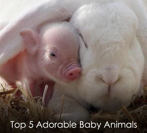 Top Five Adorable Baby Animals