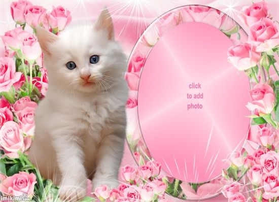 Cute Cat in Pink Roses for ME