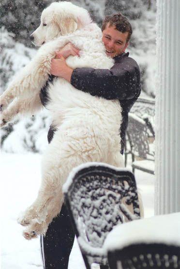 He looks like a polar bear. Love.