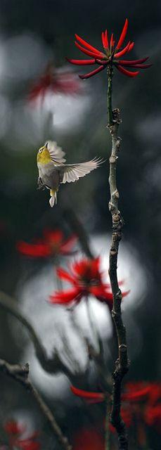 a bird, Taiwan
