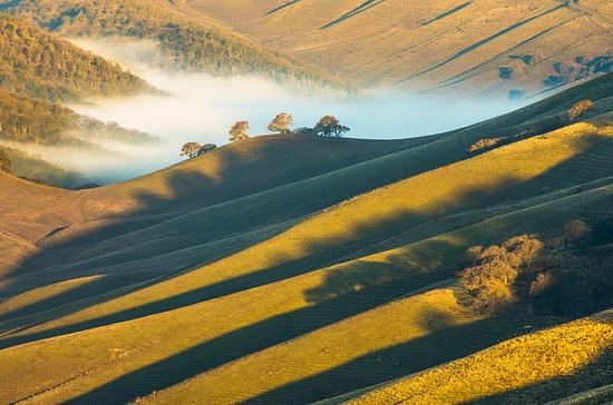 green ridges and fog