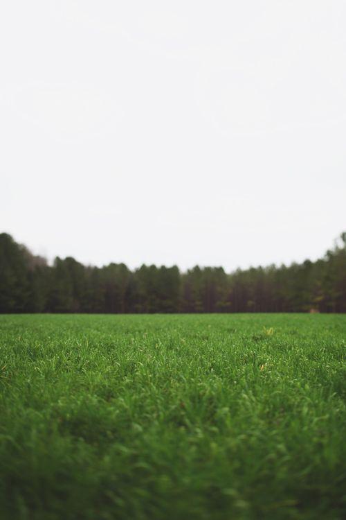 Kansas green