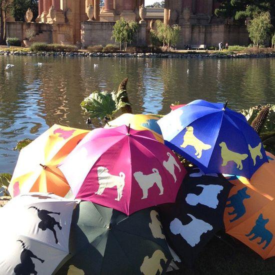 Cute Pet Umbrellas