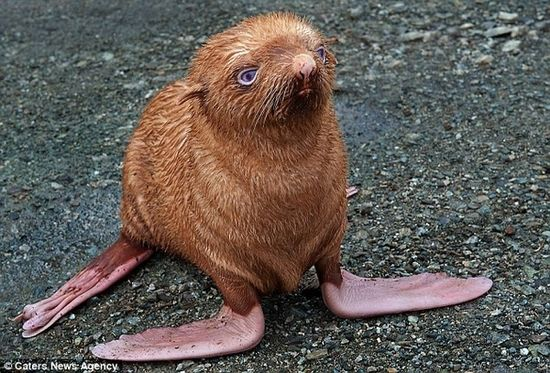 Im obsessed with this seal.  outcast from his clan because he had red hair and blue eyes