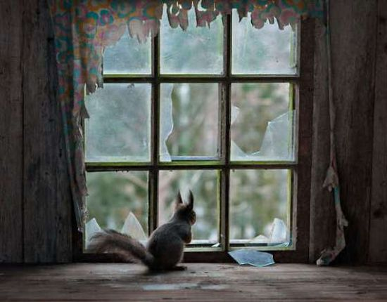 Forest-Animals-in-Abandoned-Houses-by-Kai-Fagerstrom-1