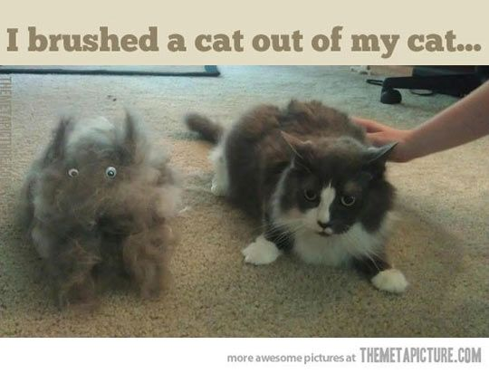 This would be my cats.