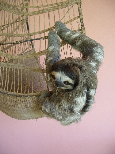 Buttercup the Sloth by yaklulu