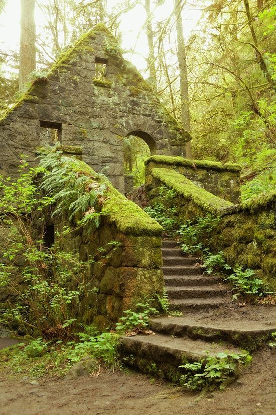 Tone House (aka Witches Castle) in the towering pine trees in Forest Park, near downtown Portland, Oregon. Covered in green lichen, moss, and ferns. An abandoned structure from the early 1900's