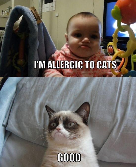 Grumpy cat/ grumpy baby