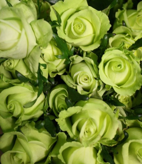 lime green roses