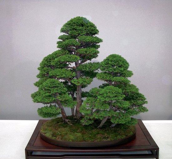 Bonsai forest