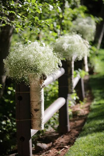babys breath and birch vases - clouds of flowers