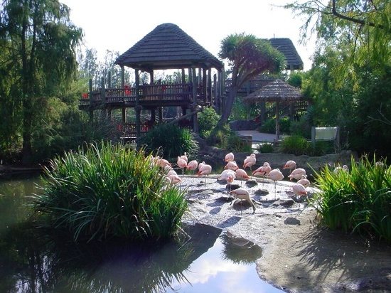 Pink Flamingos, San Diego Wild Animal Park