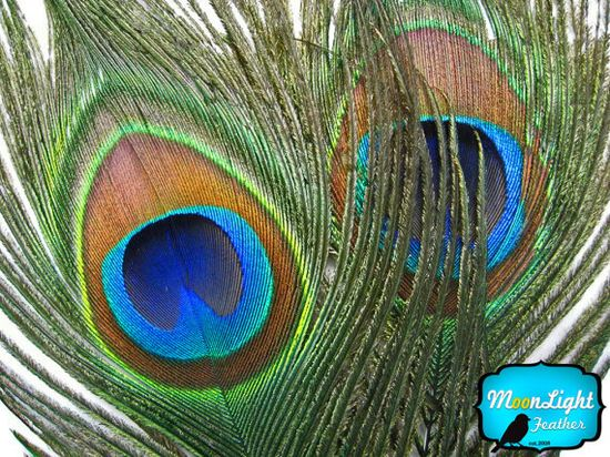 Wholesale Peacock Feathers, 50 Pieces - NATURAL Peacock Tail Eye Feathers (bulk) : 1313