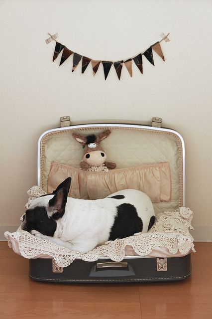 Cute bed for a bulldog, with a vintage suitcase and some decor
