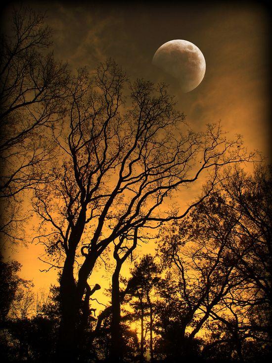 trees moon