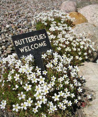 Butterflies welcome outdoors flowers sign butterflies garden design exterior