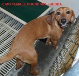 Bubba Needs Sponsor Please is an adoptable Hound Dog in Elizabethown, NC.  Bubba is a hound mix girl with a nice personality who just wants to be someones special dog. She would always welcome you ho...
