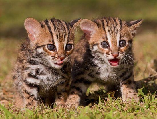 Baby Animals 6