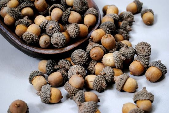 #acorn