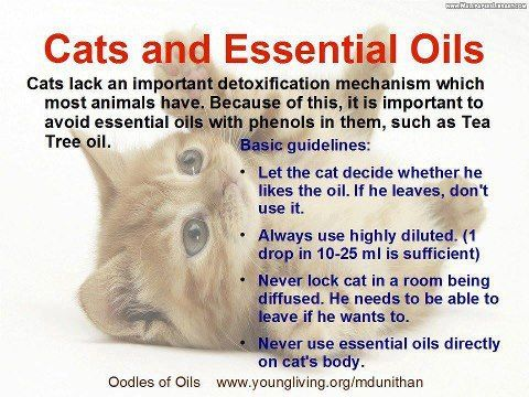 Cats and essential oils & precautions to be taken.  LEARN MORE about. Young Living oils/products @:  www.fb.com/...