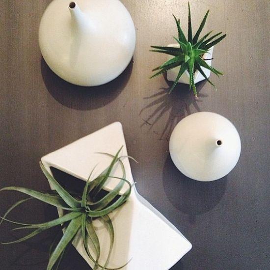 #interior #decor #styling #plant #minimalist