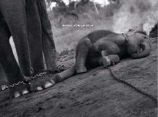 the circus - nothing could be more cruel...Please don't support the circus!