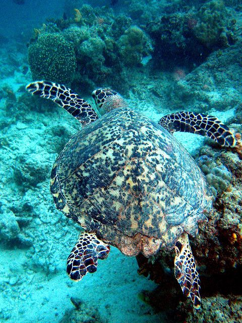 ? Green Turtle .. By Perry Aragon?
