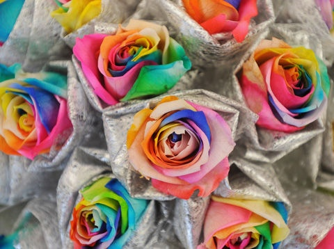 Beautiful colored roses