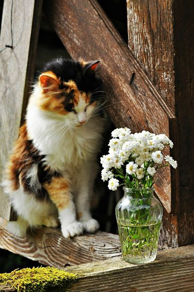 A cat and flowers......how lovely :)