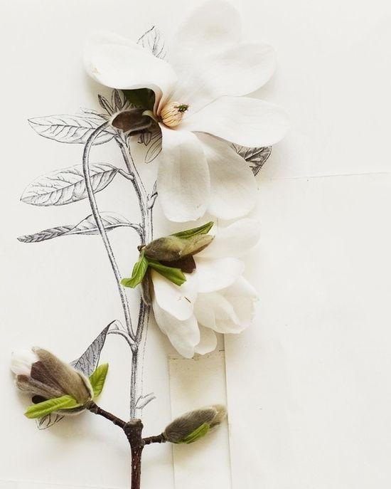 Magnolia and Flower Illustration