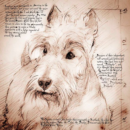 Scottie Face - Framed Giclee print on archival paper. From an original drawing in the style of Leonardo Da Vinci