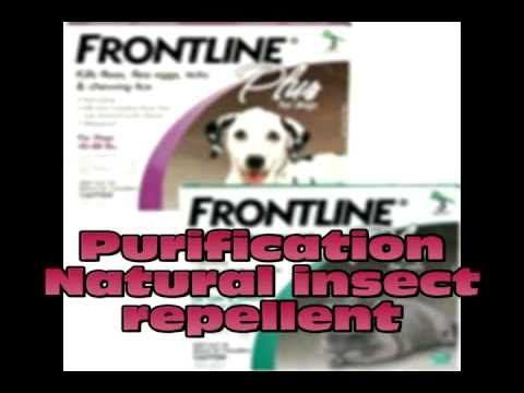 How to use essential oils on your dog part 3 purification.avi