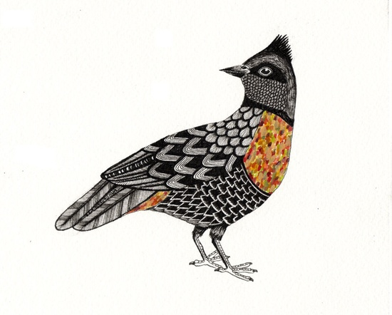 A bird to go with all these feathers. This one is beautifully illustrated and painted with gouache.