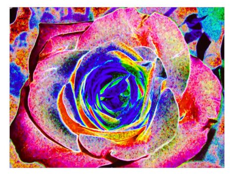 Rainbow-Colored Rose Giclee Print by Rich LaPenna at AllPosters.com
