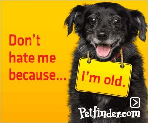I love old dogs.