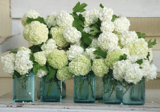 White hydrangeas in mason jars. Perfect for a barn wedding.