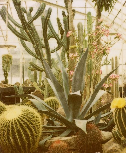 cactus#luxury house design #living room design #home interior design 2012